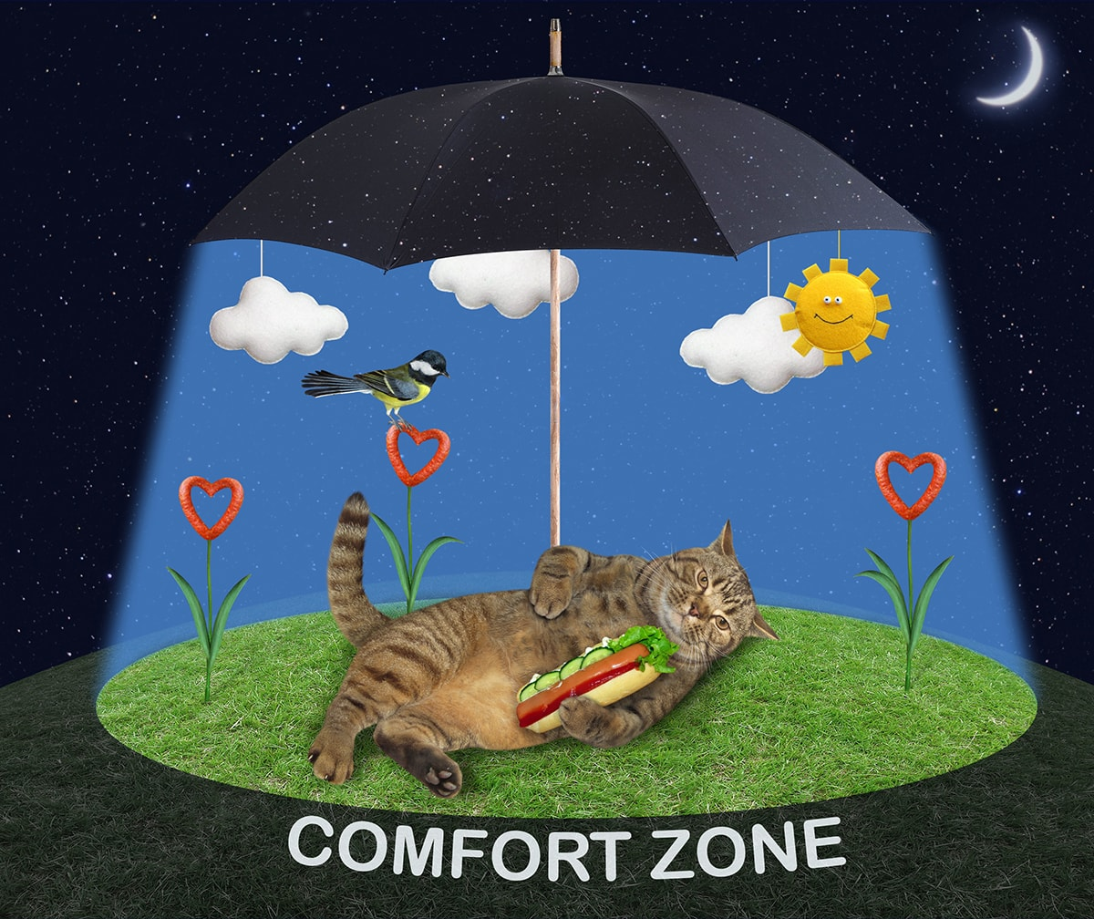 Cat lying on grass under umbrella